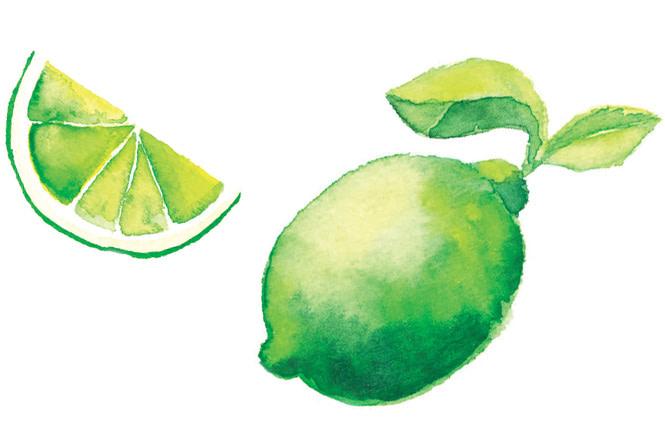 Watercolour Lime Illustration