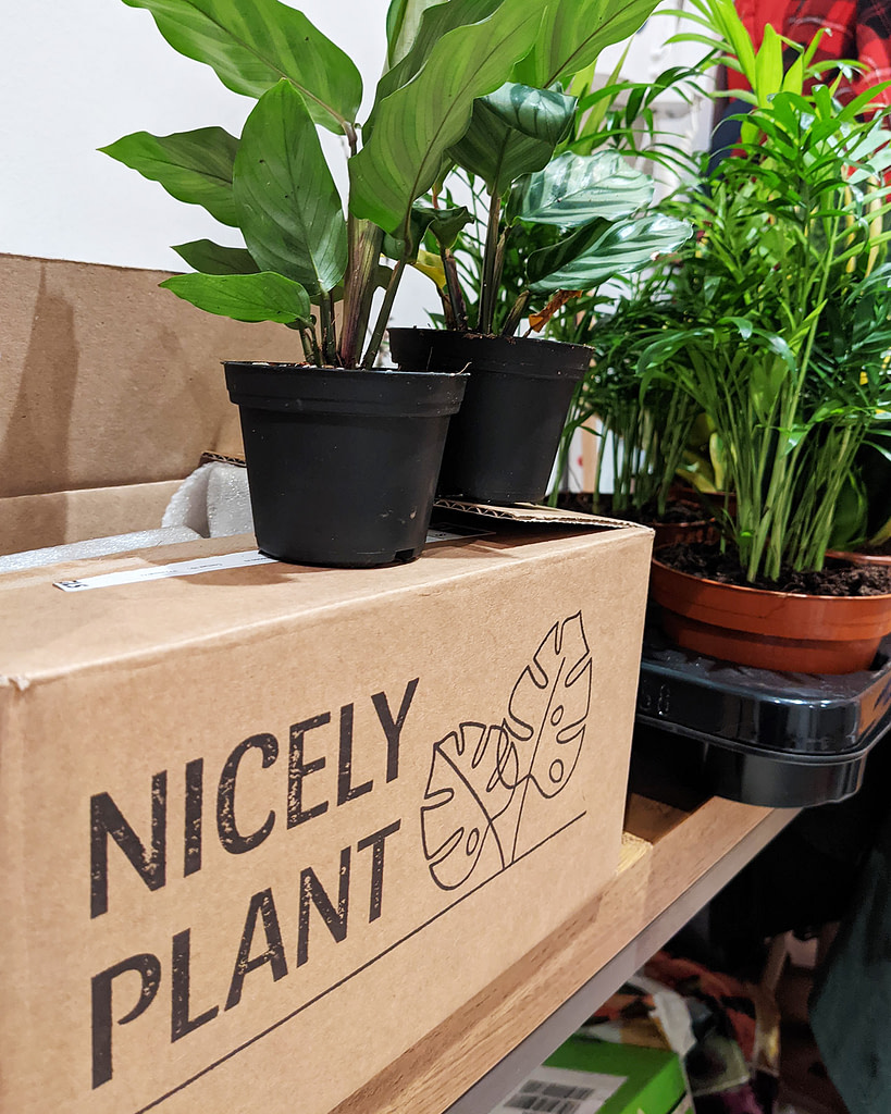 Nicely Plant Box